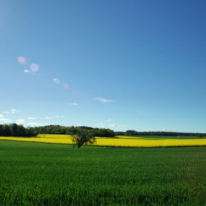 Odlingslandsap