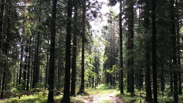 Skogsvägen
