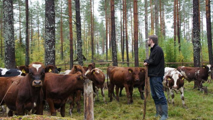 Per Nordgren, Isi Nordgrens, Årets nötköttsföretag i Norrbotten 2018