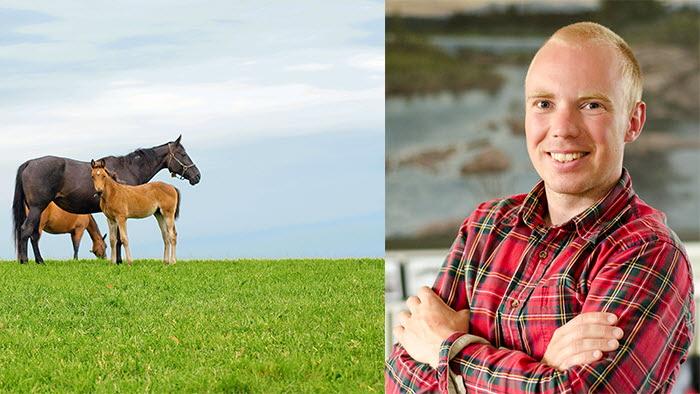 hästdelegation