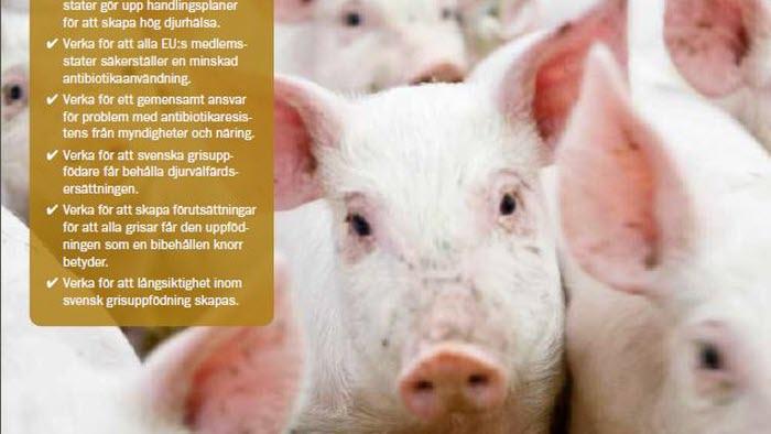 Framsida. Kort fakta om svensk grisuppfödning