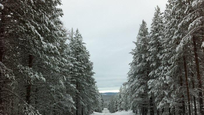 Vinterväg och väg