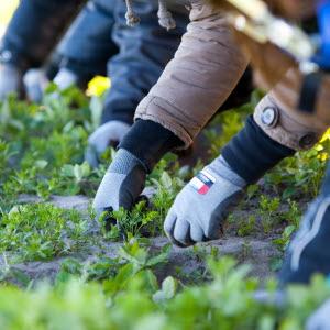 Ungdomar rensar ogräs på Widegrens Gård