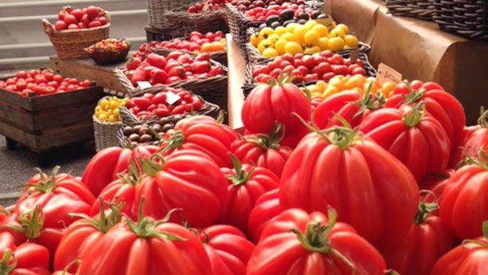 Tomatträff i gamla orangeriet, Bergianska Trädgården