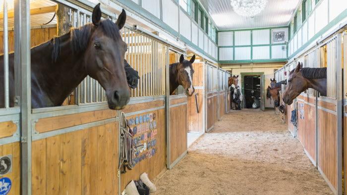 Stallgång med hästar i box