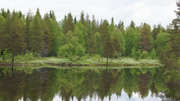 skog vid vatten i Norrbotten