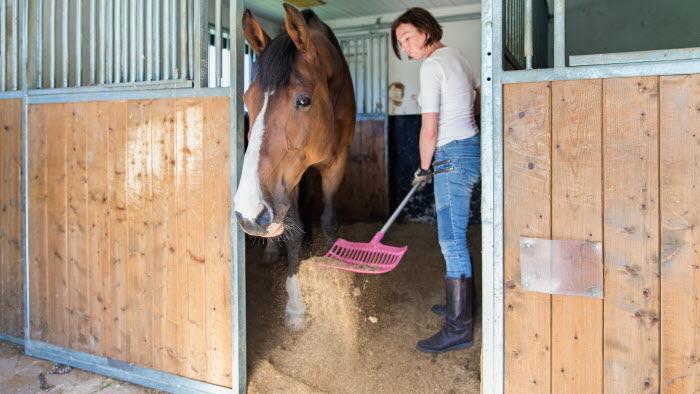 Kvinna med häst i box på Edeby gård