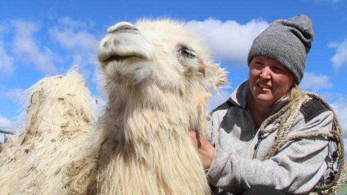Mickelbo gård, gård med exotiska djur och turism i Västerbotten, Linda Rönnlund ägare