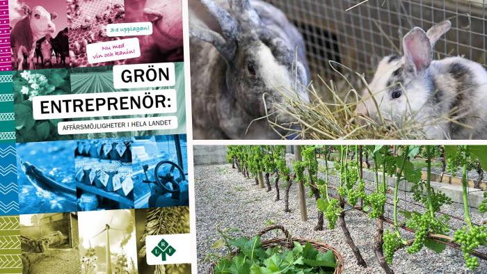 Grön entreprenör ny utgåva