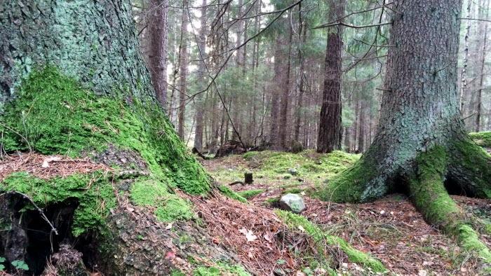 Skog med fallna löv