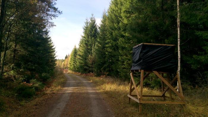 Jakttorn på skogsväg