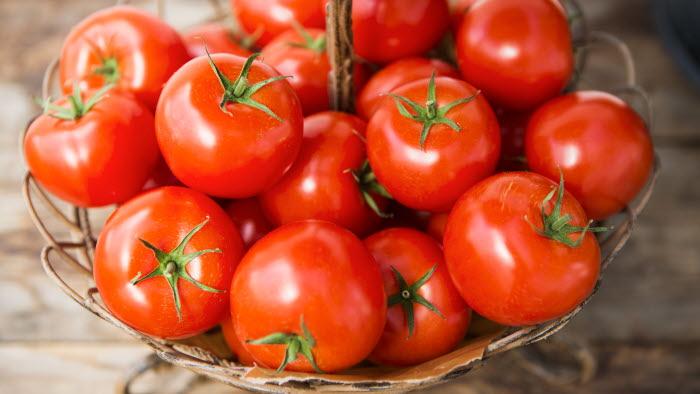 Bild från tomatträffen 2015-05-07 i Bergianska Trädgården