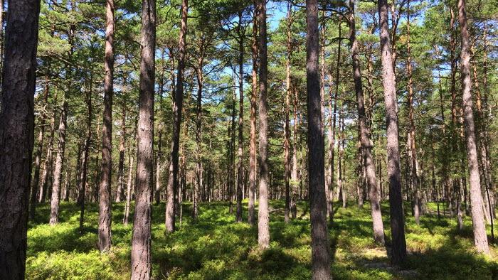 Skog,träd