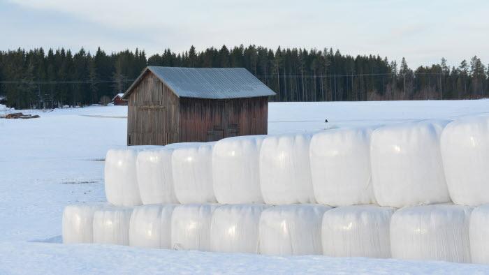 Rundbalar i vintermiljö