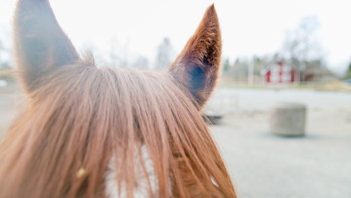 Hästöron på Grindtorps gård