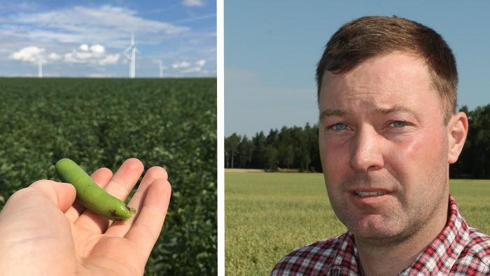Fredrik Andersson från Arboga satsar på växtbaserat protein. Helt rätt, enligt senaste rapporten från Macklean.