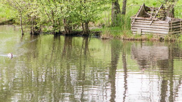 Damm vid Hörby gård. Foto: Ester Sorri