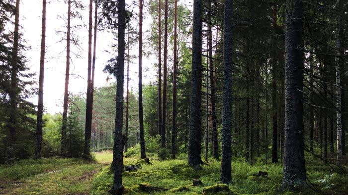 Skogsvägen in från vedtorget