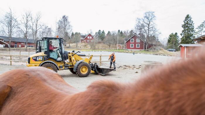 Hästrygg med traktor i bakgrunden på Grindtorps gård