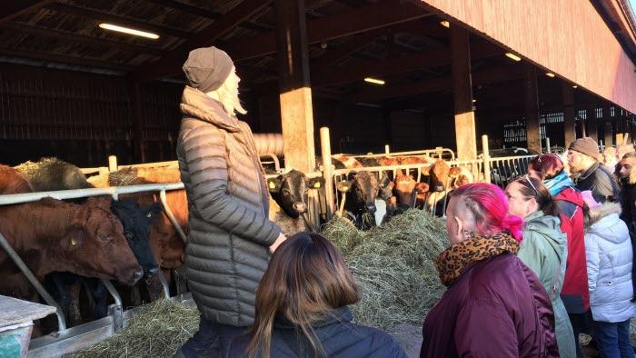 Erica Eriksson på Kromsta gård berättar om gårdens uppfödning av stutar