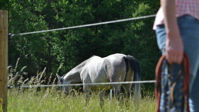 Kvinna halvt synlig med häst i hage