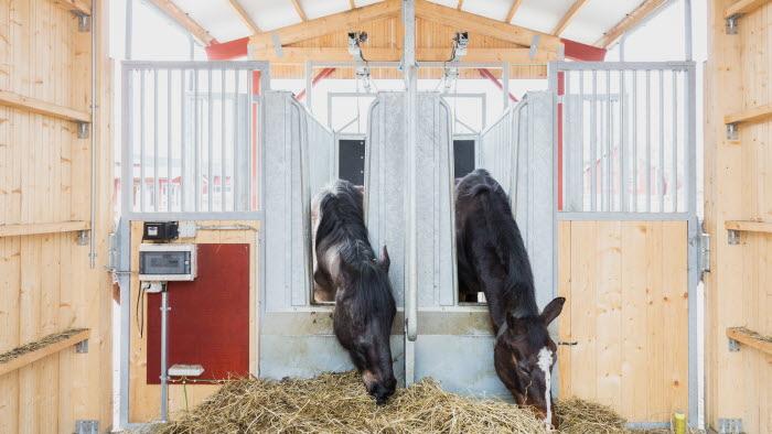 Hästar i lösdriftens utfodring