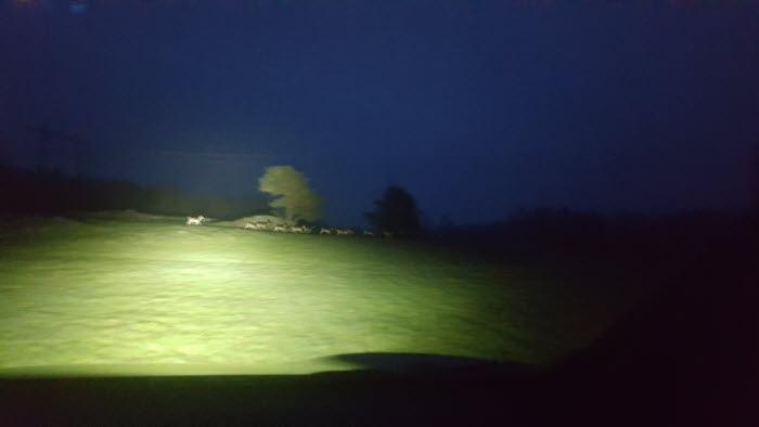 Hjortar springer i mörkret på en åker