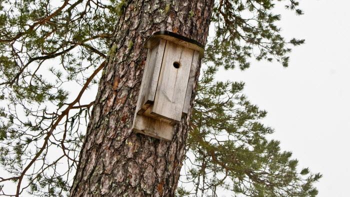 Fågelholk. Fällforsens Friesergård, Agnäs.