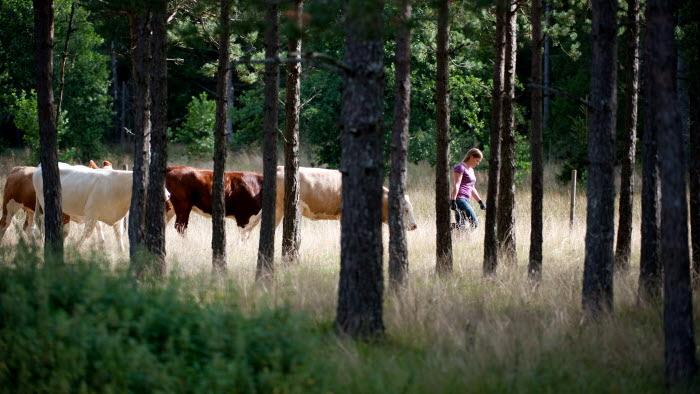 SJUHÄRAD  200908xx  Martin Larsson Sjuhärad
