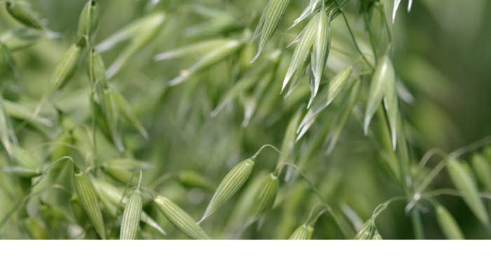 Nationella branschriktlinjer spannmål, oljeväxter och trindsäd