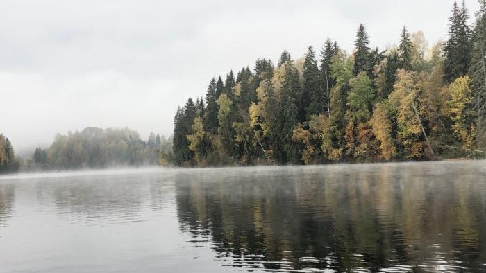 Höst vatten Skog