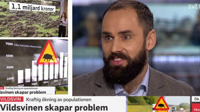 DAvid Petterson, LRFs frontfigur i kampanjen Fakta på bordet, pratar vildsvinsproblematik i SVT