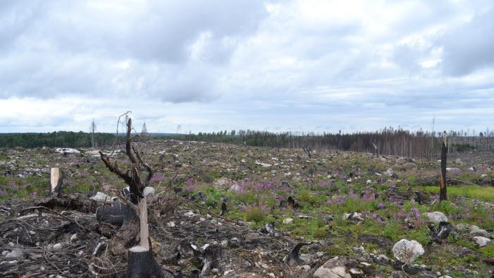 Brandhärjad skog