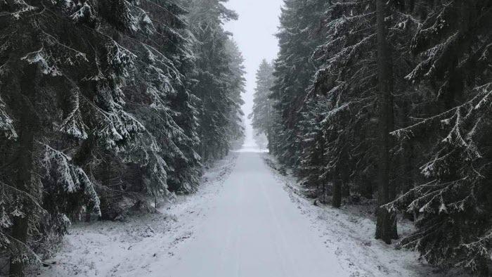 vinter, skog, gran, väg,skogsbilväg