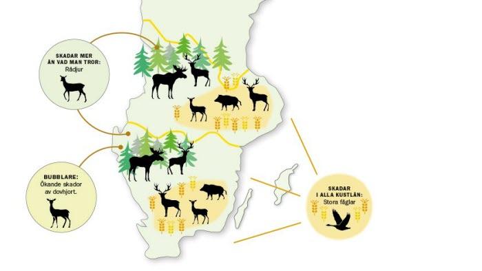 Karta över viltet som skadar skogar och åkrar