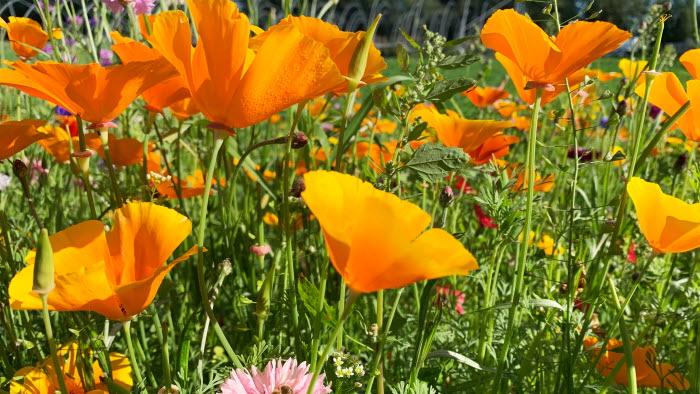 Agropark blomsteräng