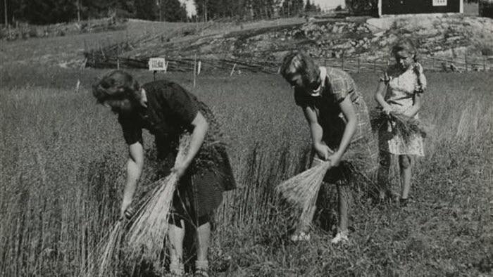 Jordbruk, havreskörd, Finlandshjälpen, 1945-1955