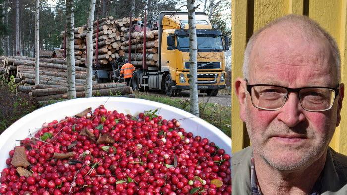 Hans-Erik Mårtensson om bärplockare