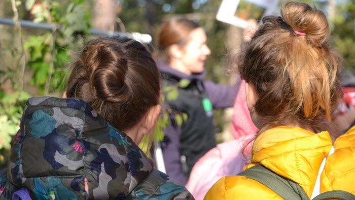 Elever lär sig om skog med Bonden i skolan på Berga