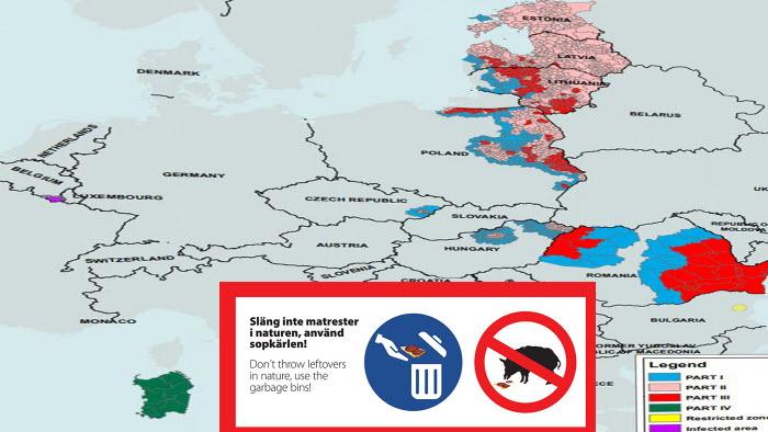 afrikansk svinpest breder ut sig i EU. Sprid info, inte smittan.