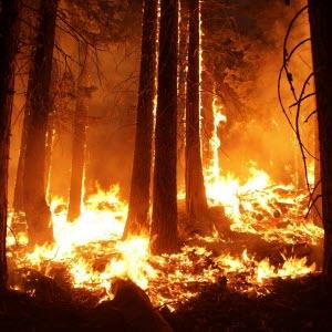 Skogsbrand, eld, skog, natur