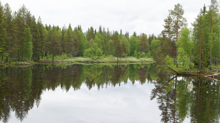 skog och vatten i Norrbotten