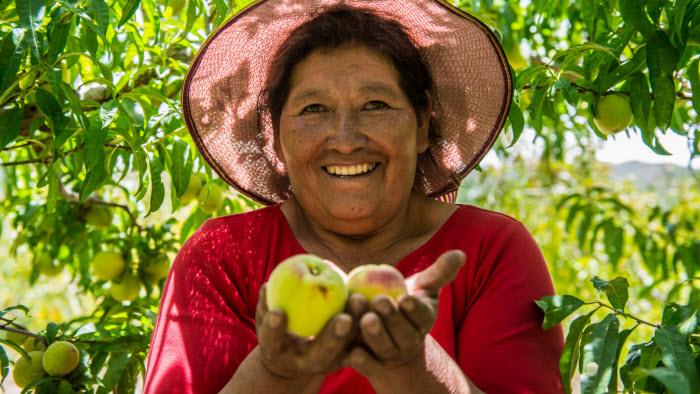 Teodosia Gonzales småbrukare i Bolivia. Hon är en av de bönder  som We Effect stöttar.