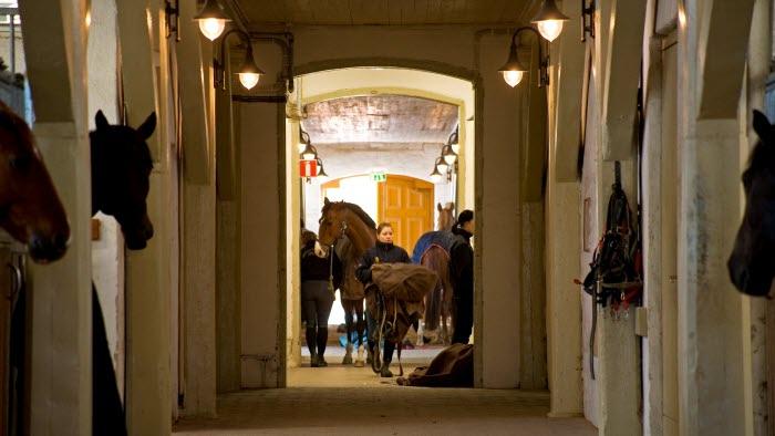 utbildning strömsholm stall
