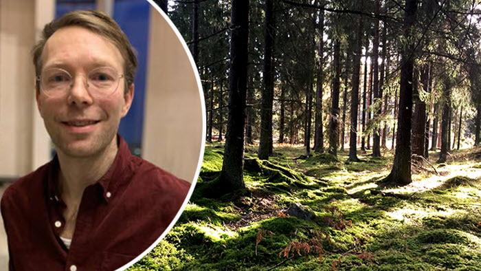 Simon Jonegård krönika skogsutredningen