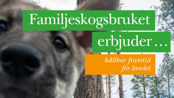 Familjeskogsbruket erbjuder hållbar framtid för landet