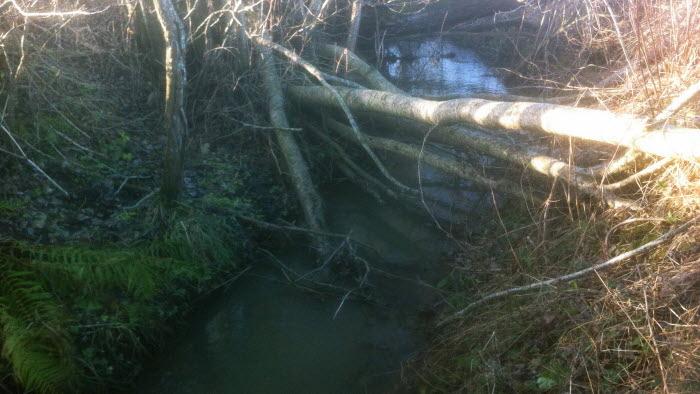 Dike med nedfallna träd