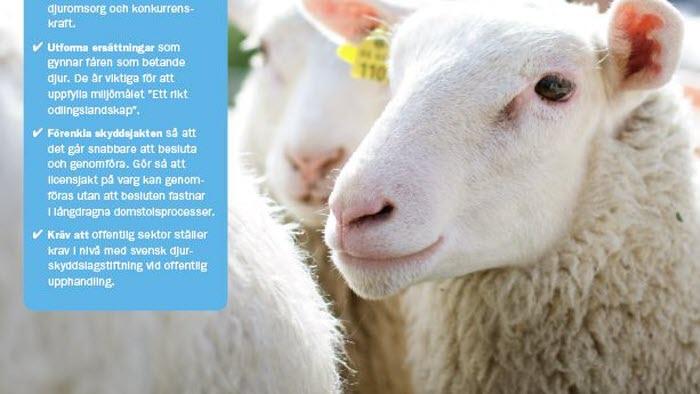 Framsida broschyr Korta fakta om svensk lammuppfödning