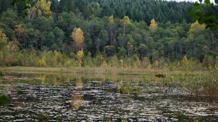 Skogssjö