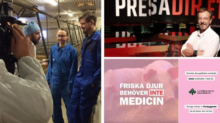 Italiensk TV besökte LRF för att berätta den svenska framgångssagan om god djurhållning och låg antibiotikaanvändning